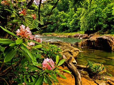 """""""River Blooms"""", Audra, WV"""